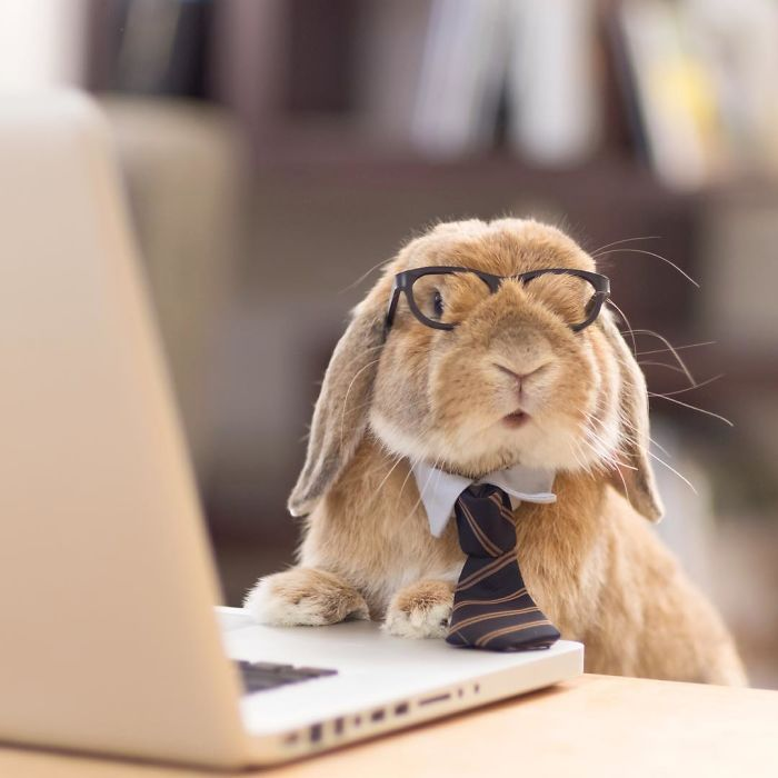 worlds-most-stylish-bunny-puipui-16-571f6590797b0__700