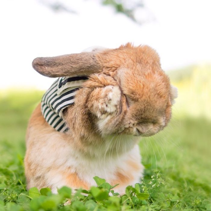 worlds-most-stylish-bunny-puipui-26-571f65a570c01__700