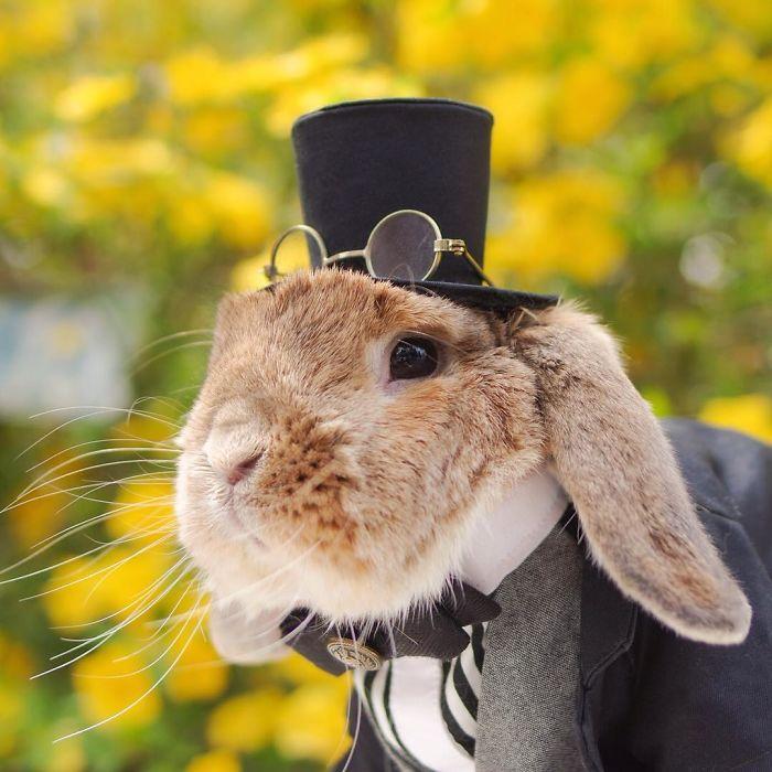 worlds-most-stylish-bunny-puipui-27-571f65a7b1e44__700