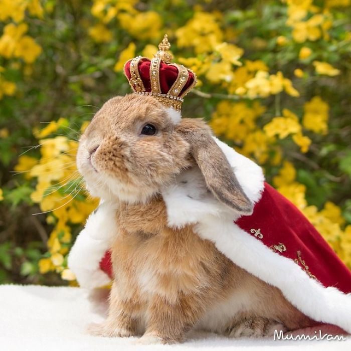 worlds-most-stylish-bunny-puipui-33-571f65b38a4c5__700