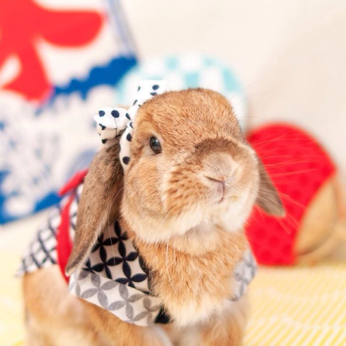 worlds-most-stylish-bunny-puipui-8-571f657fe886b__700